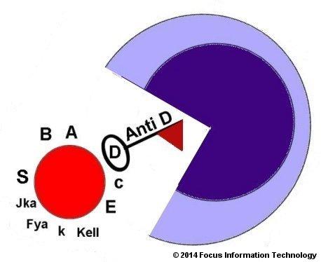RH Disease and Red Blood Cell Alloimmunization (Patient ...